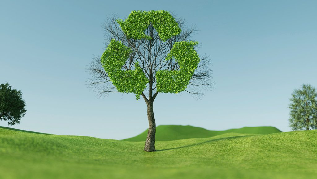 tree, recycle, sustainability